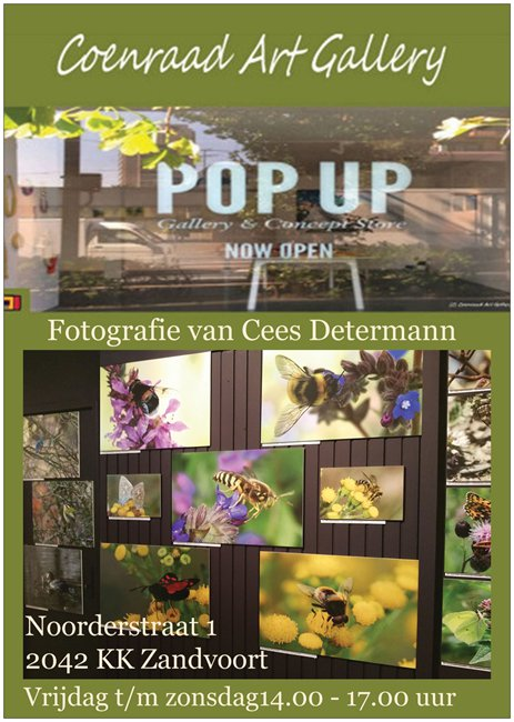 pop-up-cees-determann