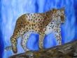 A-Asian-panther