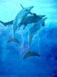 A-Dolfines